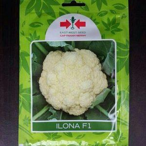 Benih Bunga Kol Ilona 10 gram