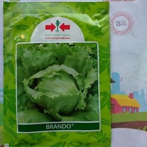 Benih Salada Crop Head Lettuce BRANDO 20 gram