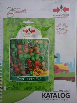 Benih Tomat Hibrida TANTYNA F1