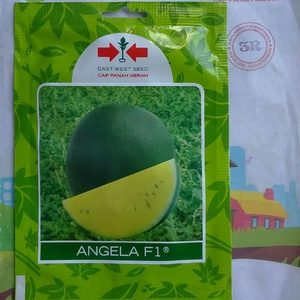 Semangka Kuning ANGELA F1