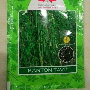 Benih Kacang Panjang Kanton TAVI 200 biji