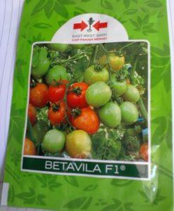 Benih Tomat Betavila 10 gram
