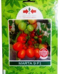Benih Tomat Marta 9