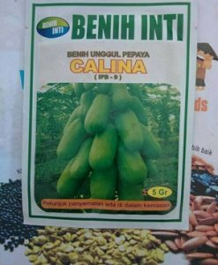 Benih Pepaya California Calina IPB 9