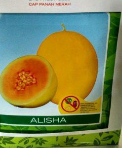 jual benih melon alisha