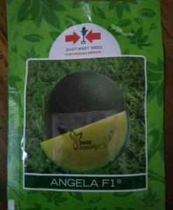 jual benih semangka kuning angela